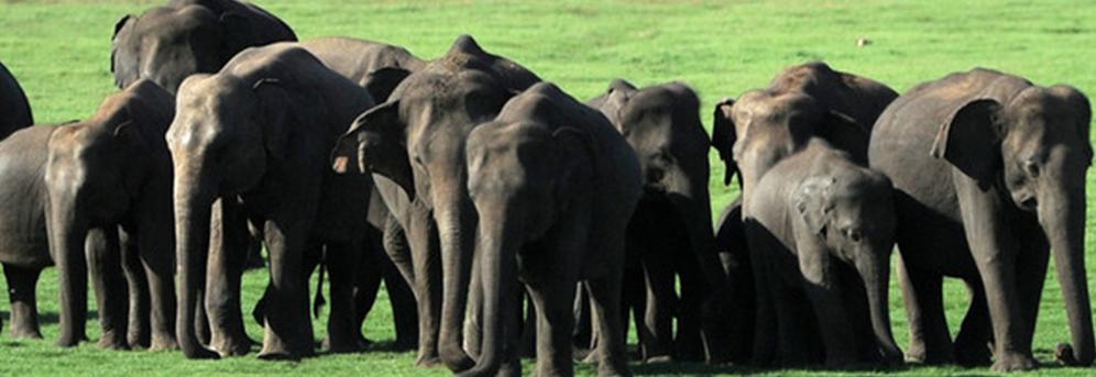 17 elefanti